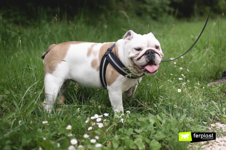 Cane in passeggiata per mantenersi in forma