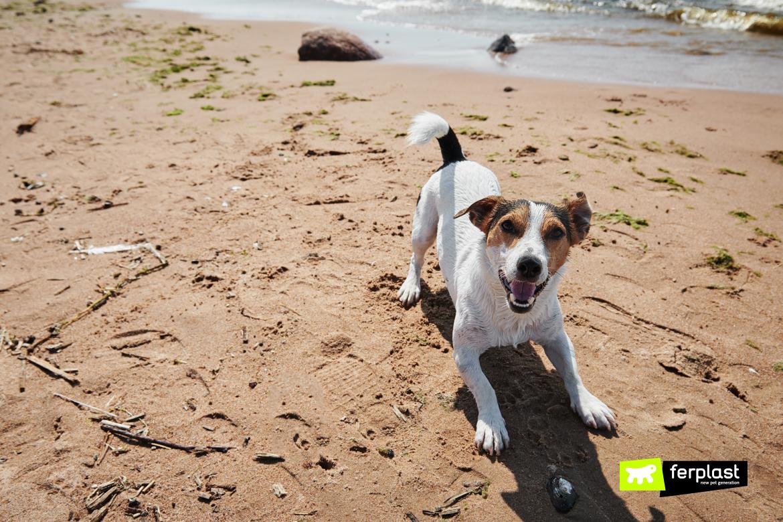 Cane sulla spiaggia in estate