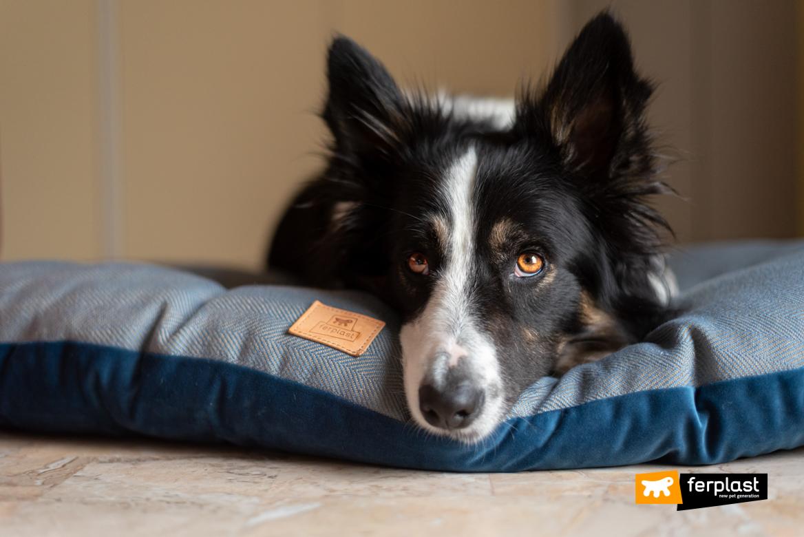 O-cão-descansa-sobre-a-almofada-Ferplast