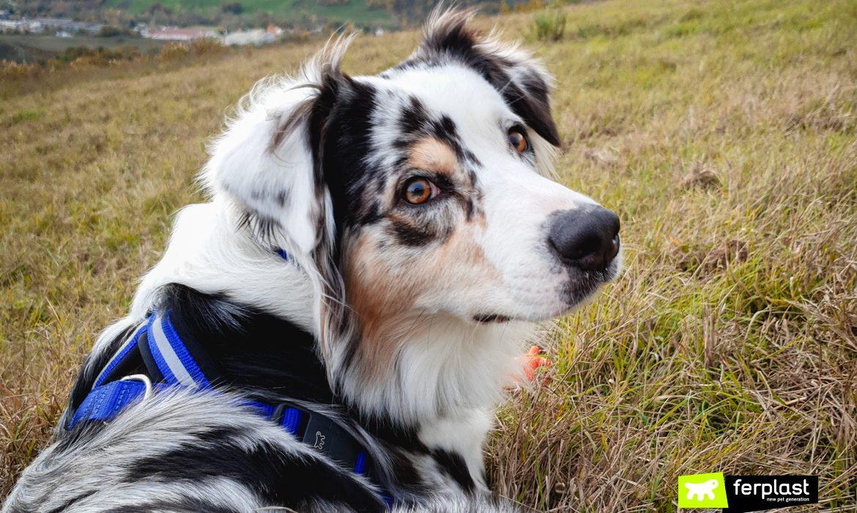 Cão usando arnês Daytona P Cross Ferplast