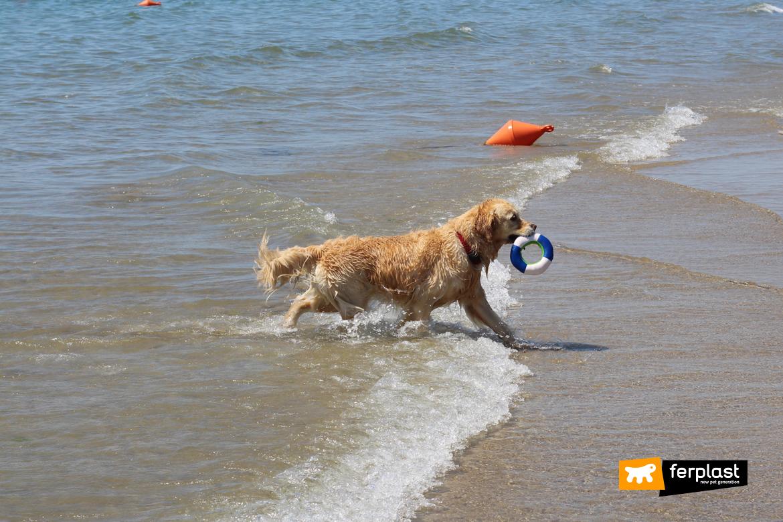 Cane al mare con gioco acquatico di Ferplast