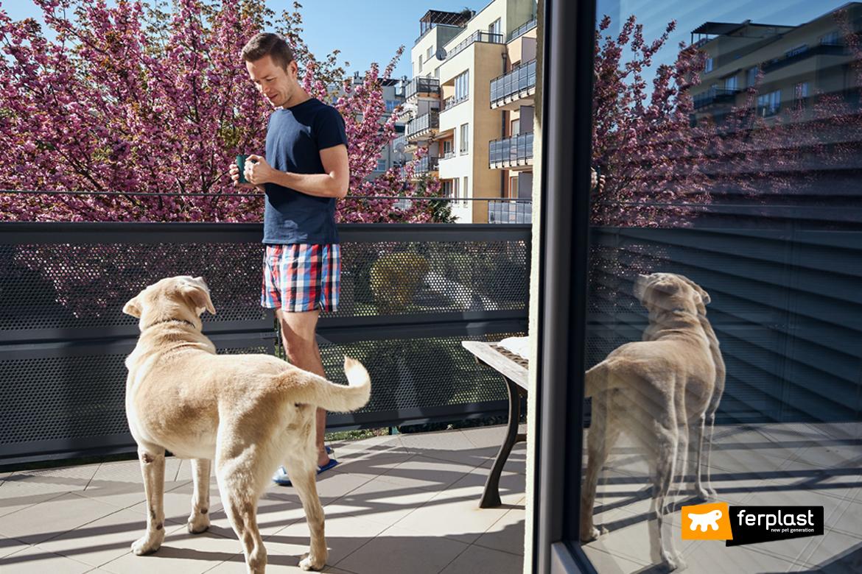 Cão-de-férias-em-um-hotel-amigo-dos-animais