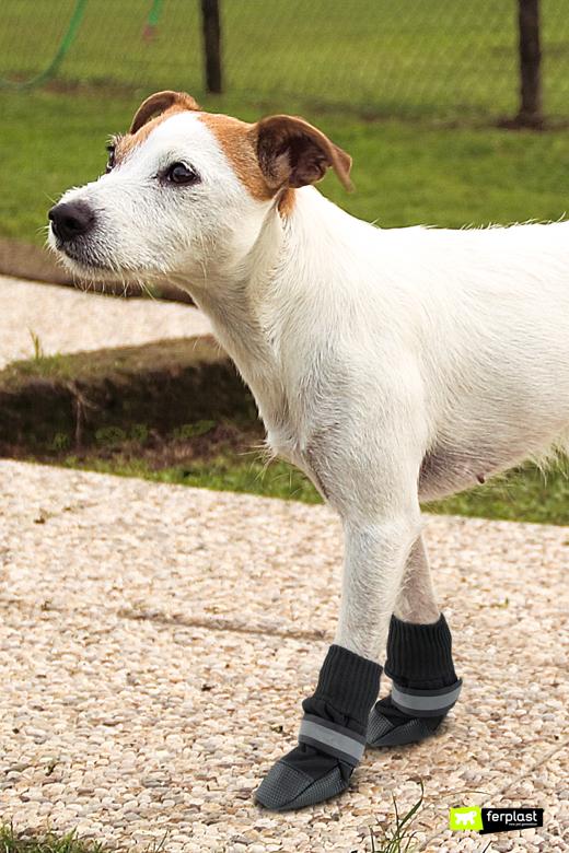 Cane indossa scarpette protettive Ferplast per proteggersi dal caldo