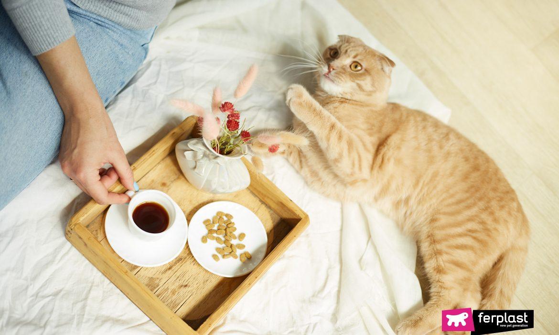 Gatto in vacanza in un hotel pet friendly