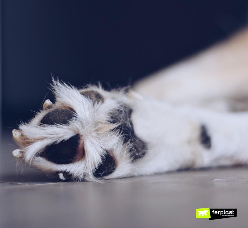 Zampe del cane: dettaglio