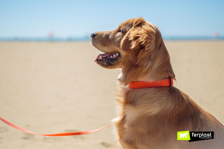 Guinzaglio Evolution di Ferplast al mare con il cane