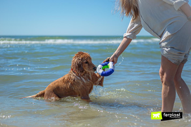 Cane gioca in acqua con il salvagente di Ferplast