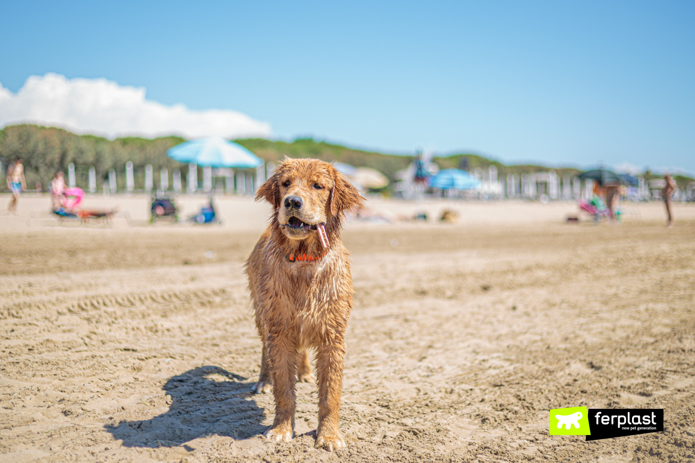 GoodBite di Ferplast da portare al mare con il cane