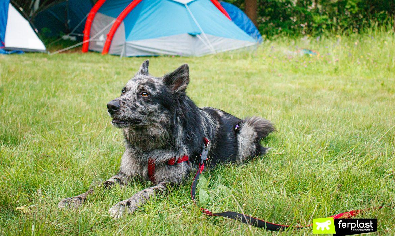 Cane in campeggio con tenda in lontananza e accessori Ferplast