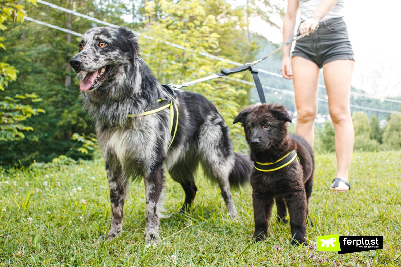 Cani al guinzaglio con terminale doppio di Ferplast