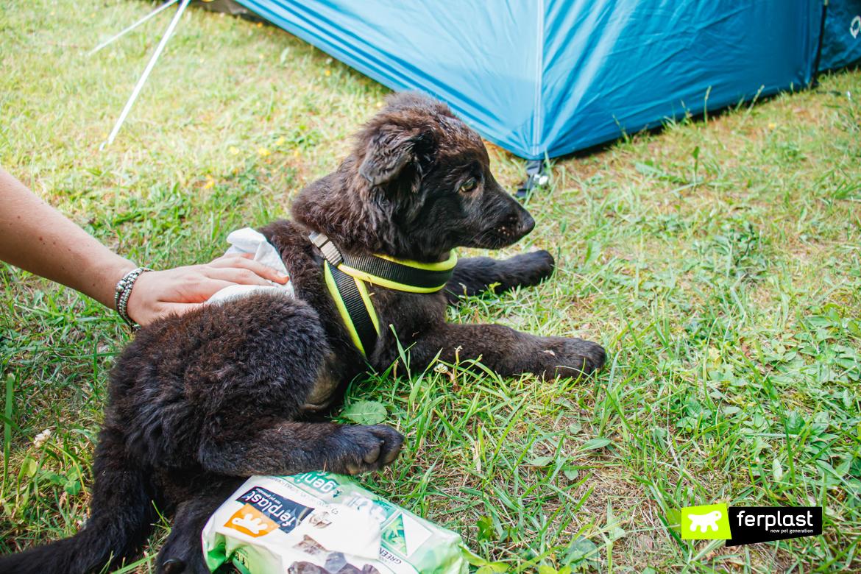 Cane in campeggio con salviettine Genico di Ferplast