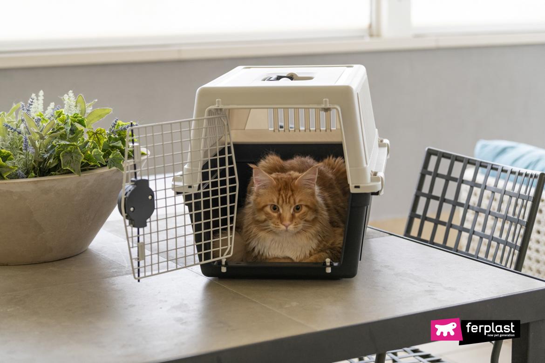 Gatto in vacanza nel trasportino Atlas di Ferplast