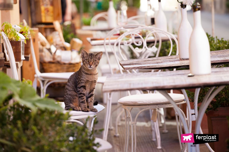 Gatto in vacanza seduto a un bar