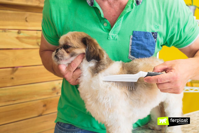 Pettinare il cane prima delle vacanze: toelettatura del cane