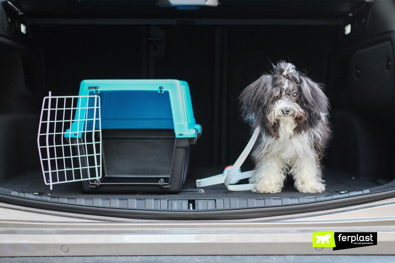 Cane di piccola taglia accanto a trasportino Ferplast in auto