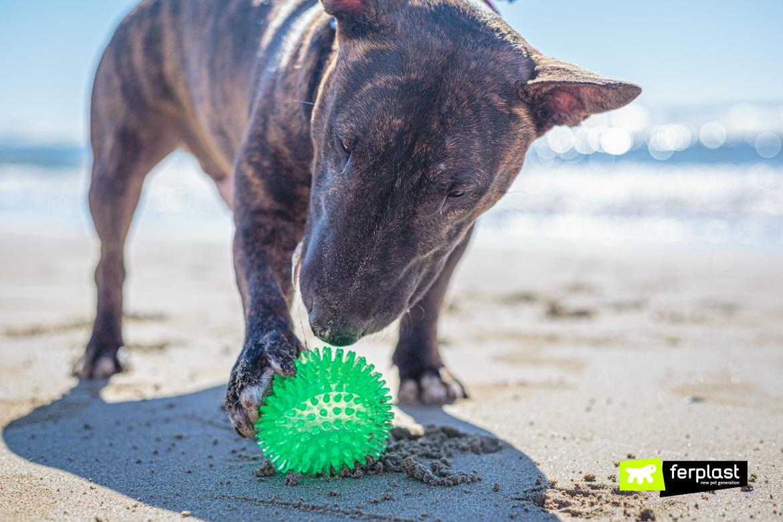 Bull Terrier Miniature gioca con pallina Ferplast