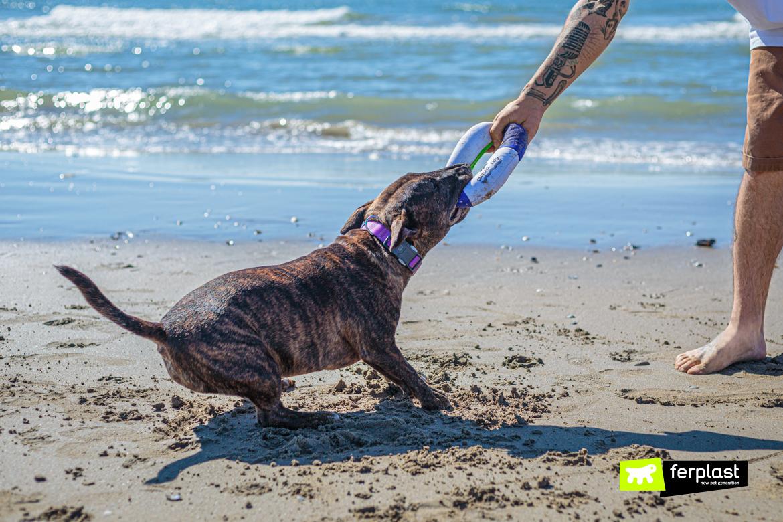 Bull Terrier Miniature gioca al mare con salvagente di Ferplast