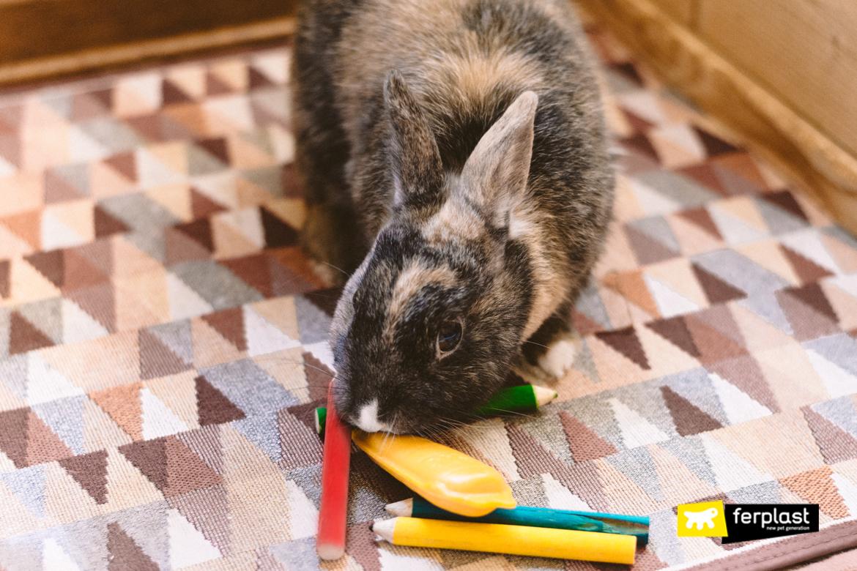Coniglio domestico con giochi masticabili Ferplast
