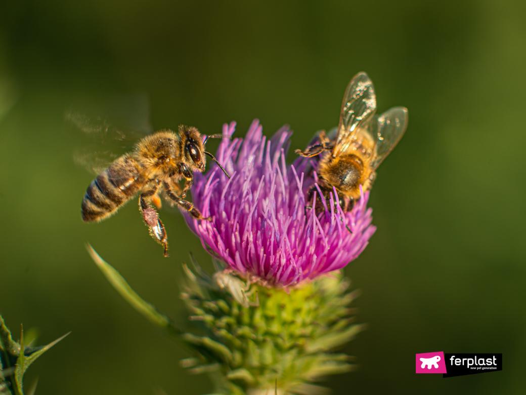 Immagine di due api su un fiore viola
