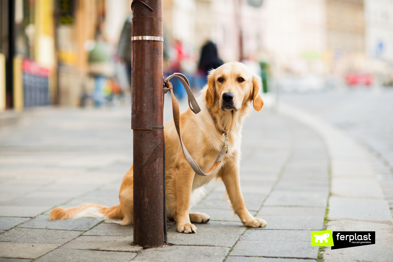 Cane abbandonato per strada