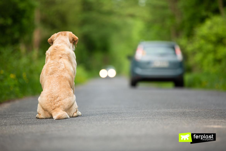 Cane abbandonato per strada guarda il padrone andarsene