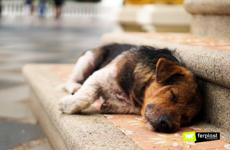 Cucciolo abbandonato sul marciapiede