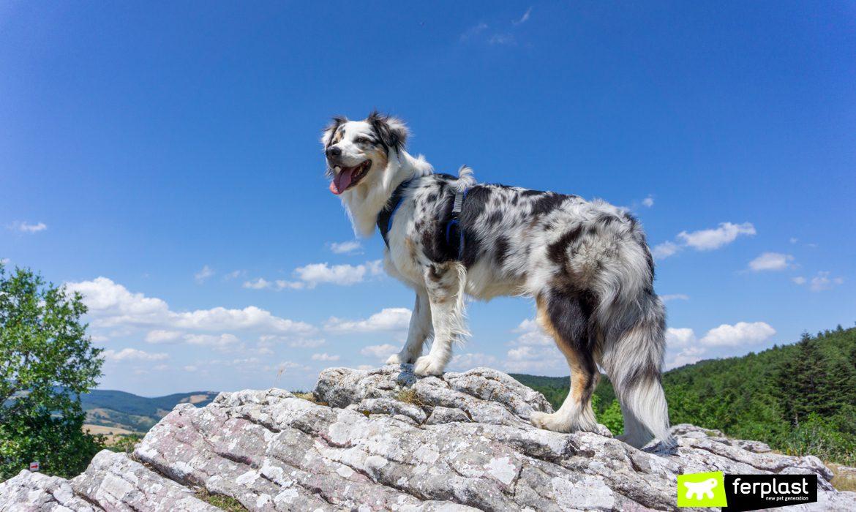 imbracatura ferplast ergocomfort guinzaglio feliz flippy one mountain australian shepherd dog