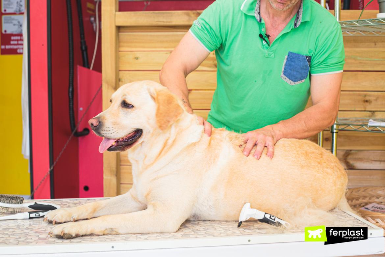 Toelettatura del cane in estate con gli accessori Ferplast