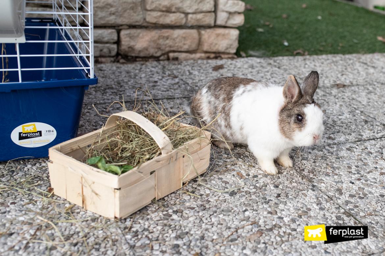 Coniglio accanto al fieno per la sua alimentazione