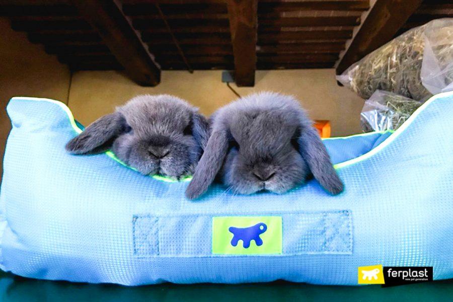 Coppia di conigli domestici nella cuccia Ferplast
