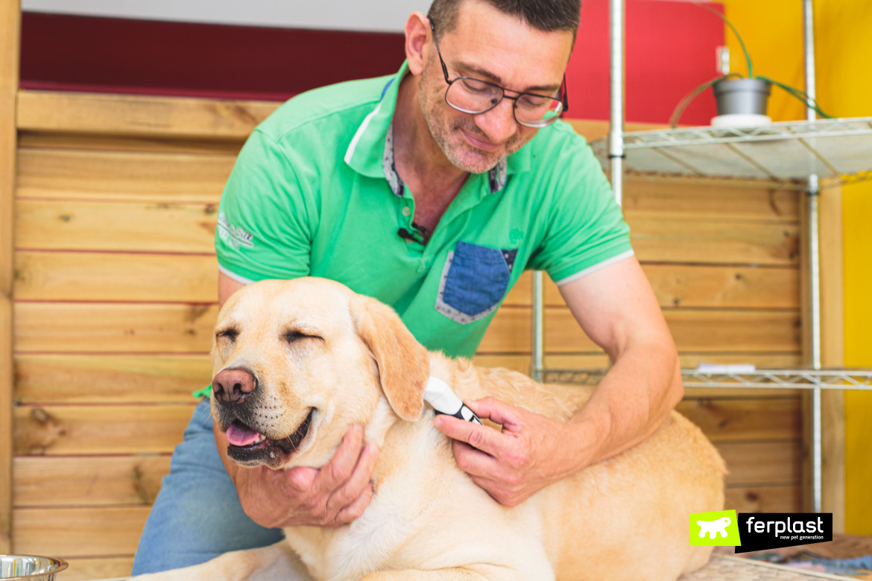 Toelettatura del cane in estate con le spazzole Ferplast