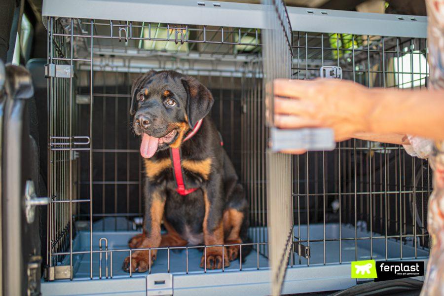 Cane nel Superior di Ferplast usato come trasportino
