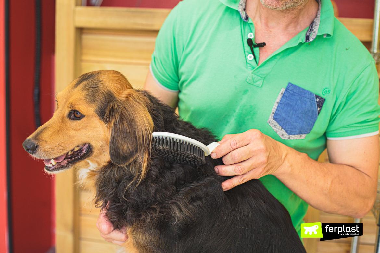 Cane spazzolato con spazzola Gro Premium di Ferplast durante la toelettatura