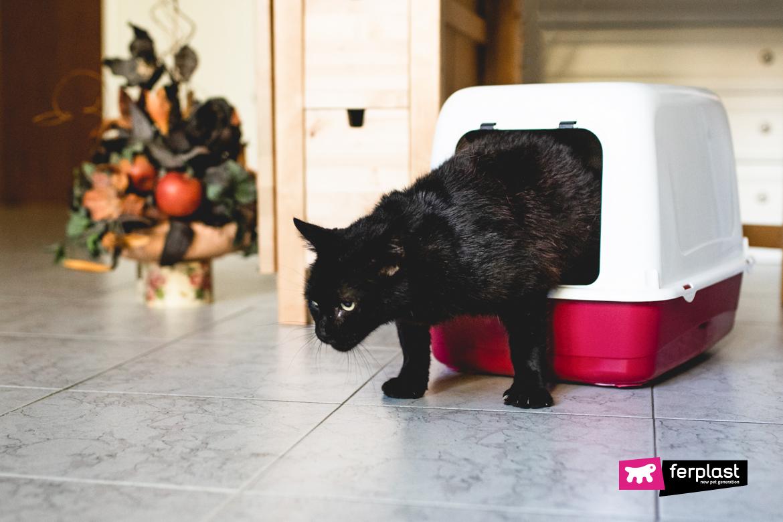 Gatto nero esce dalla lettiera chiusa di Ferplasst
