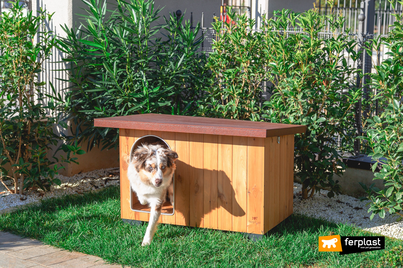 Cane esce dalla casetta in legno FSC di Ferplast