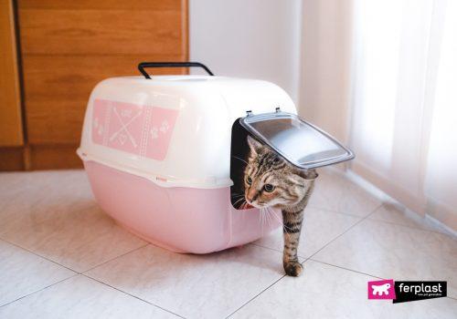 Gatto nella lettiera per gatti di Ferplast