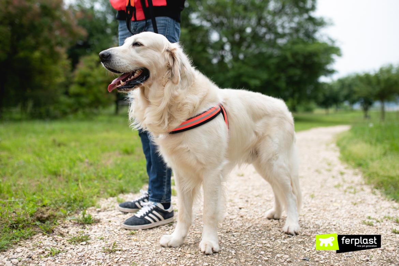 Cane in passeggiata con guinzaglio e pettorina Ferplast