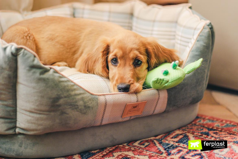 Cane con il raffreddore riposa nella cuccia Ferplast