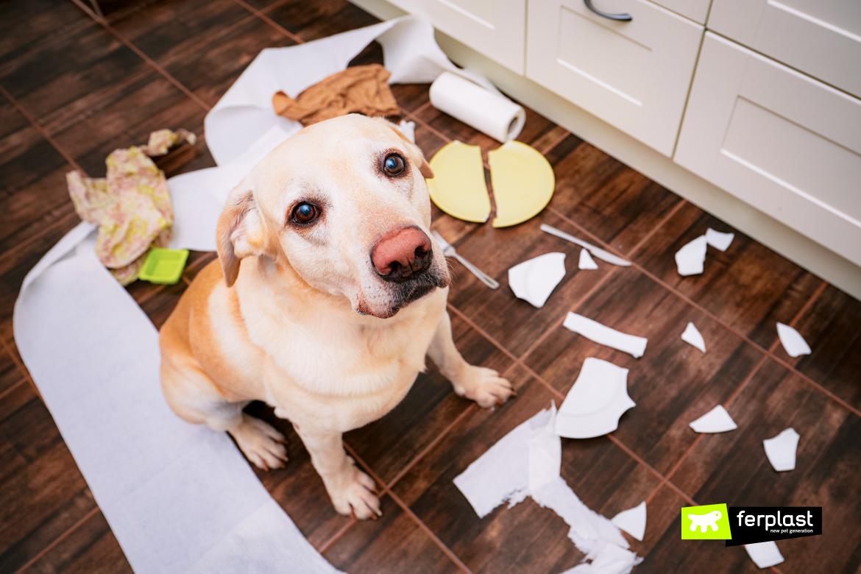 Cane da solo in casa dopo le vacanze combina guai