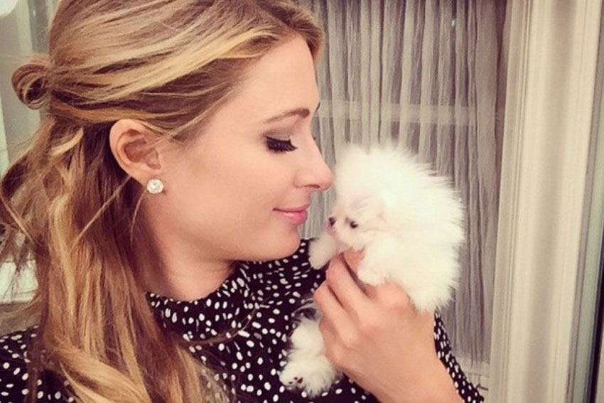 paris-hilton-adopts-new-puppy-january-2015