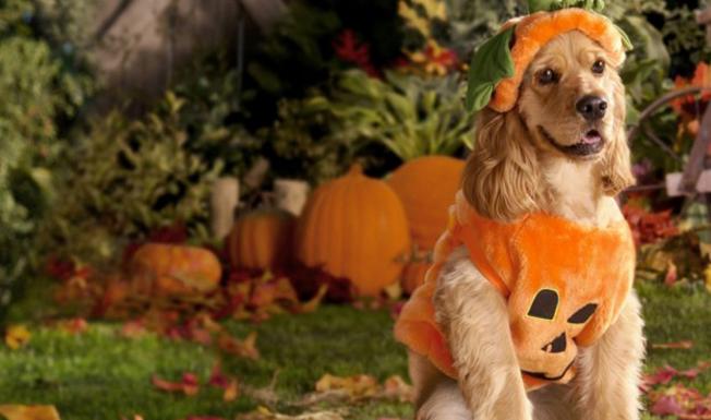 cane-cestito-zucca-halloween