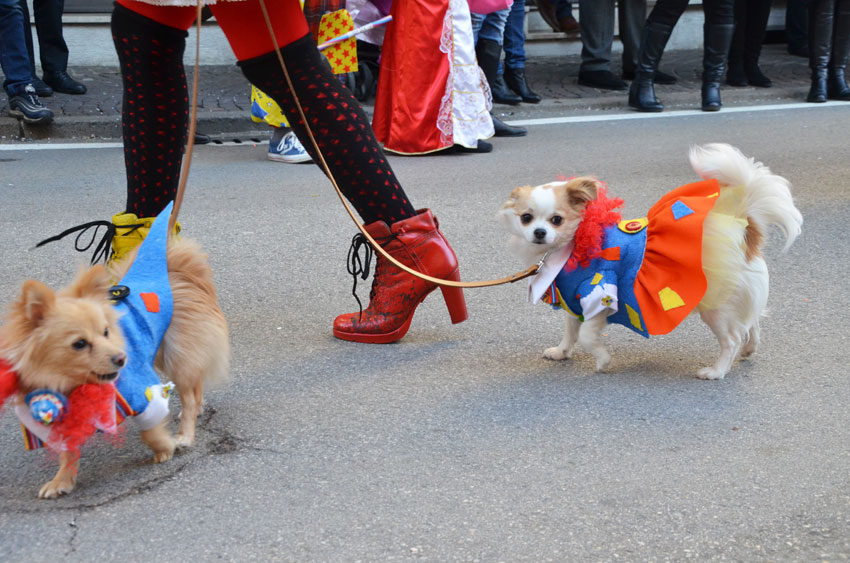 dogs-carnival-show-vicenza