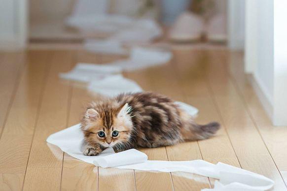 insegnare-gatto-usare-toilette