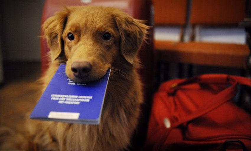 passaporto-cane-pet-passport