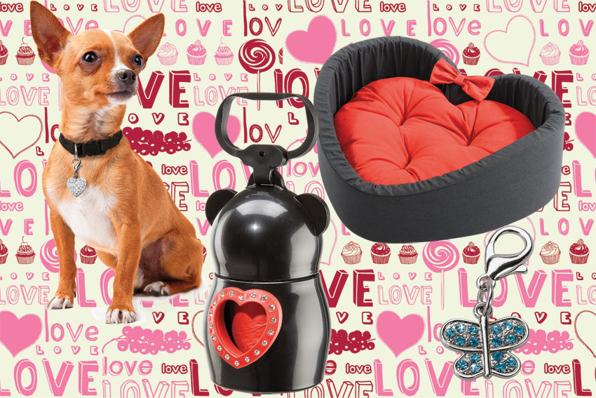 regalo-cane-san-valentino