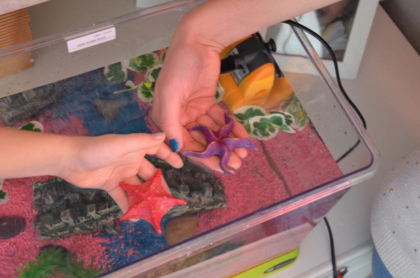 Acquario dall installazione all allestimento love ferplast for Decorazioni acquario