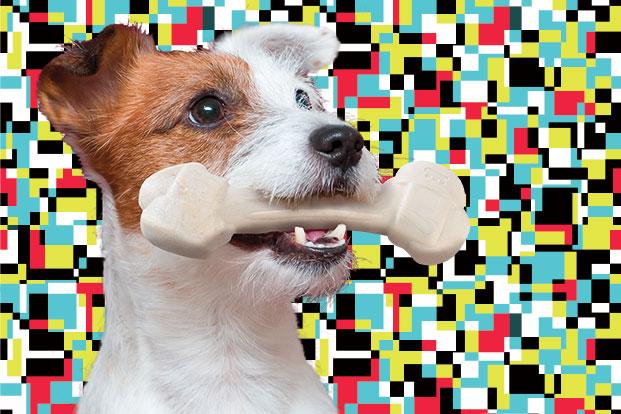 osso-cani-tartaro
