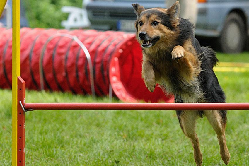agility-dog-addestramento