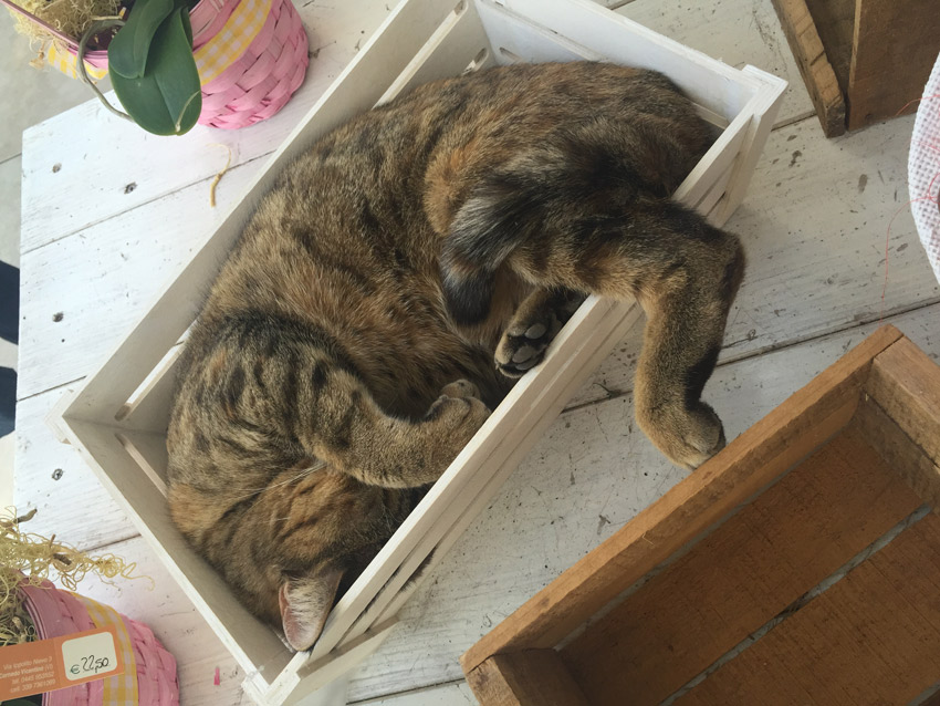 gatto-dentro-scatola-legno