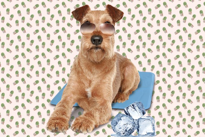 cani-sole-caldo-tappetino